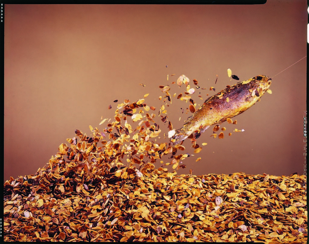 Trout flying out of bed of almonds in preparation for trout amandine. (Photo by John Dominis/The LIFE Picture Collection © Meredith Corporation)