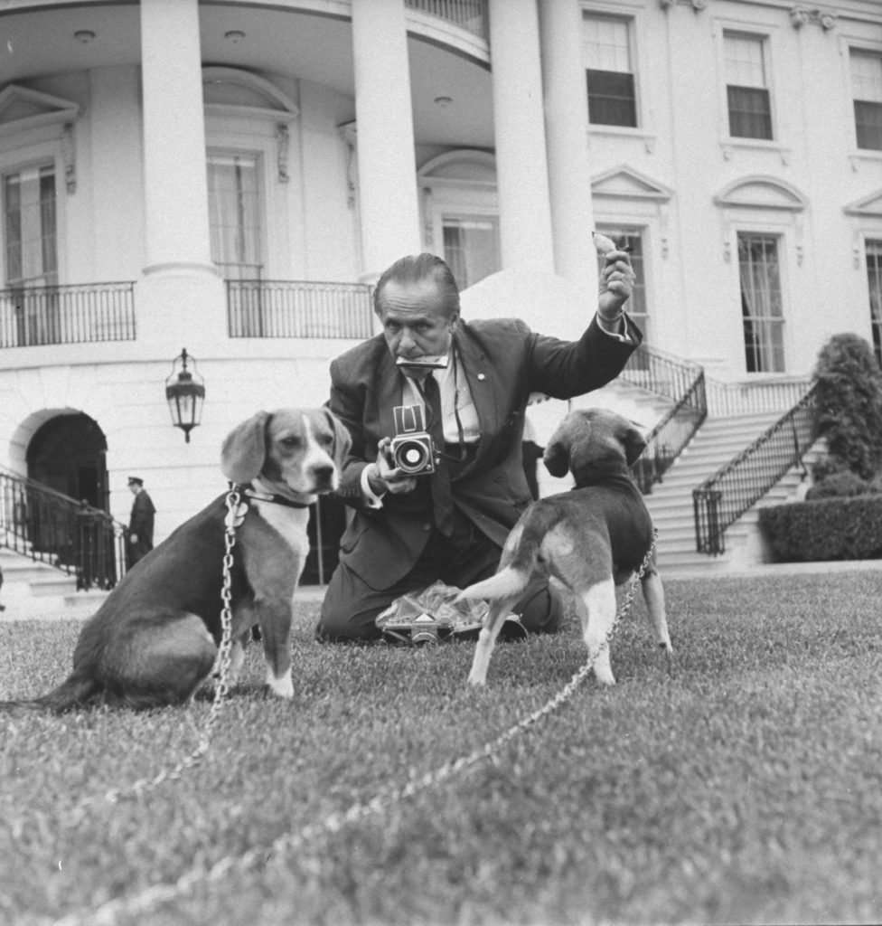 Photographer Francis Miller shooting presidential beagles on White House lawn. (Photo by Francis Miller/The LIFE Picture Collection © Meredith Corporation)