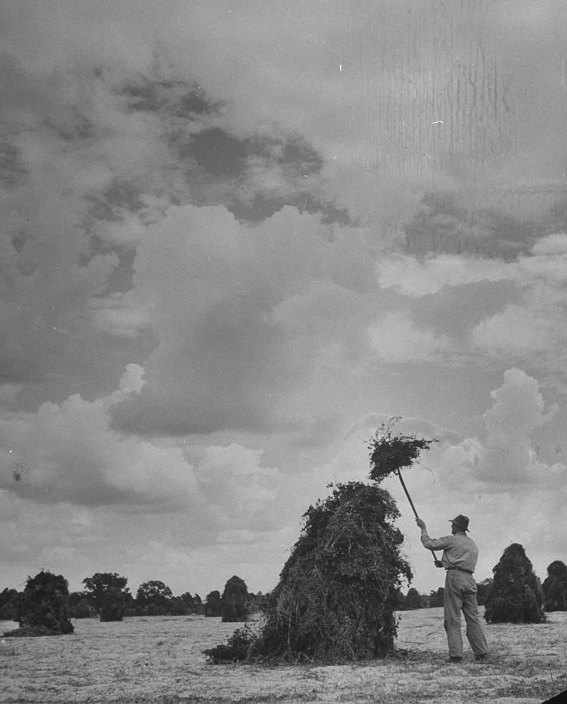 Farmer capping a peanut stack. (Photo by Bernard Hoffman/The LIFE Picture Collection via © Meredith Corporation)
