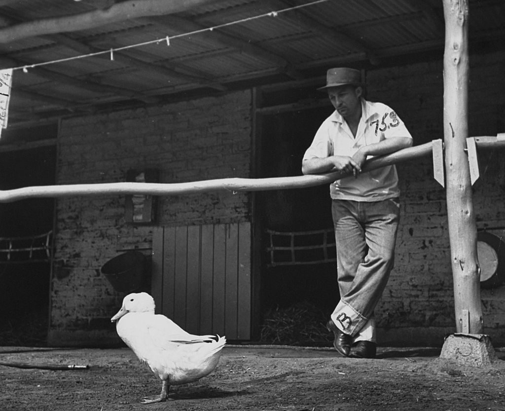 Bing Crosby gazing at duck walking by horse stable. (Photo by Rex Hardy/The LIFE Picture Collection © Meredith Corporation)