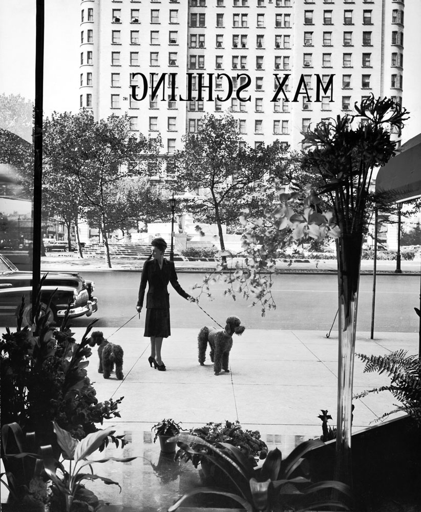 A woman walks her poodles along the sidewalk on Fifth Avenue in October 1942.