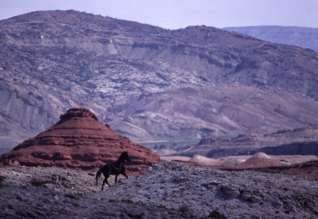 Mustang in the wild, 1968.