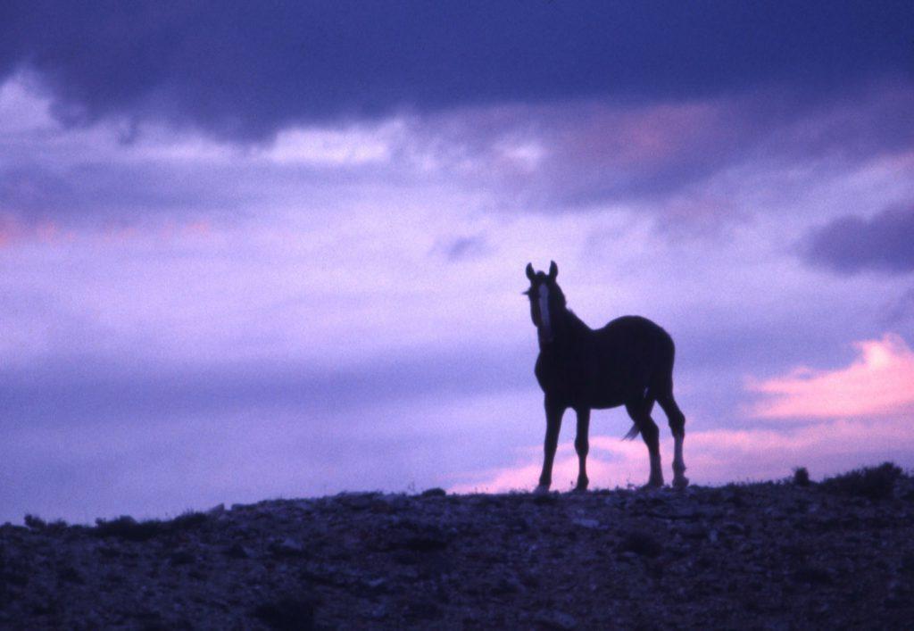 Mustang, American West, 1968.