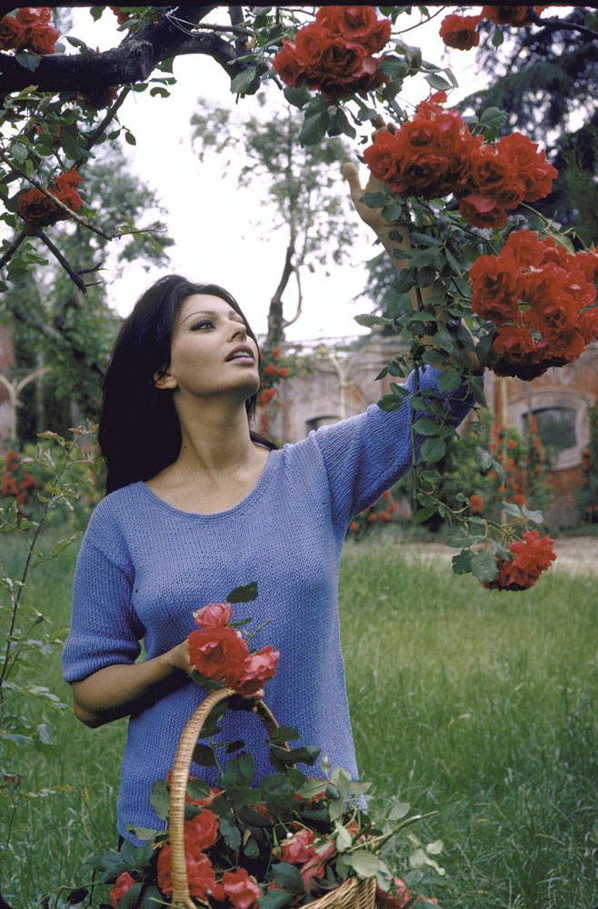 Sophia Loren picks flowers at her Italian villa she shared with producer Carlo Ponti in 1964.