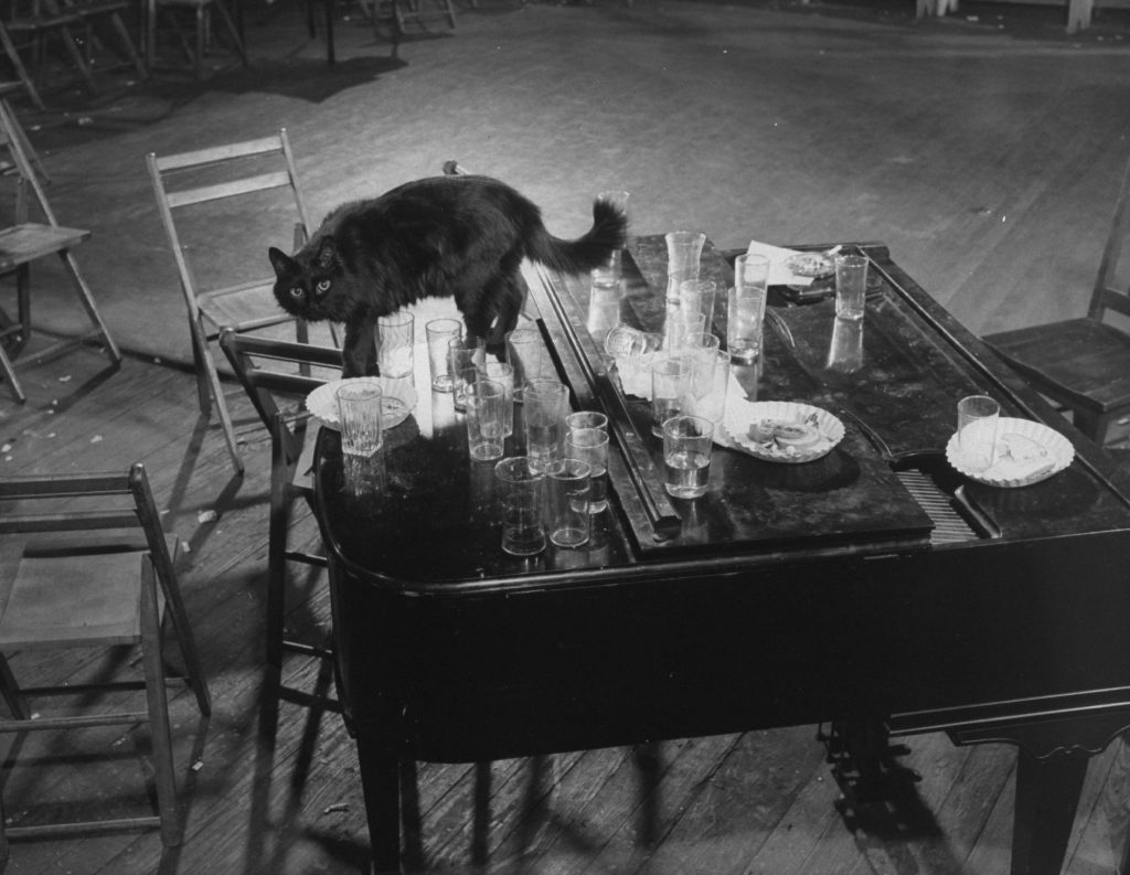 Gjon Mili's cat Blackie steps gingerly among empty glasses left on top of the piano after an all-night jam session at his (Mili's, not the cat's) studio, 1942.