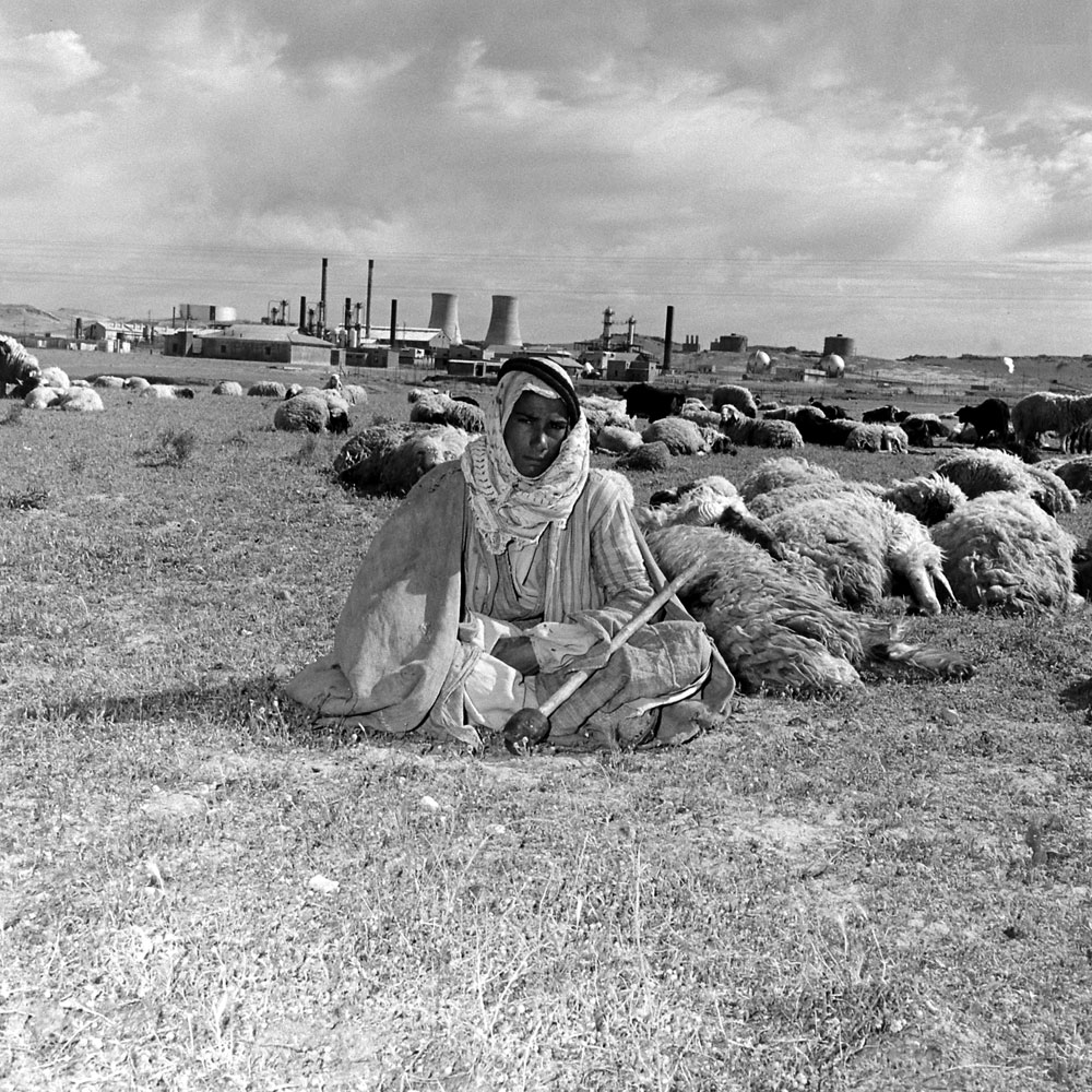 An Arab shepherd and his flock near the Kirkuk oil field, Iraq, 1945.