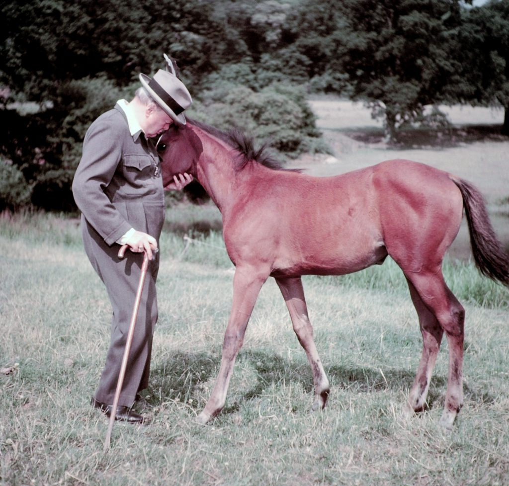 """Winston Churchill and a four-month-old thoroughbred filly (unnamed, but called """"Darling"""" by Churchill), Chartwell, Kent, 1950."""