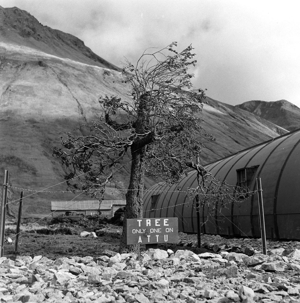 """A fake tree built by the Army Engineers, Camouflage Division, on Attu Island."" Aleutian Campaign, Alaska, 1943."