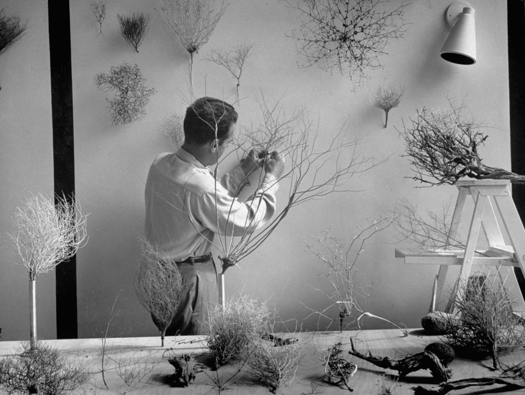 Natural designs embodied in Mojave desert plants fascinate Eames, who likes to mount them on the wall of his studio. From them, he says he gets ideas for his own designs.