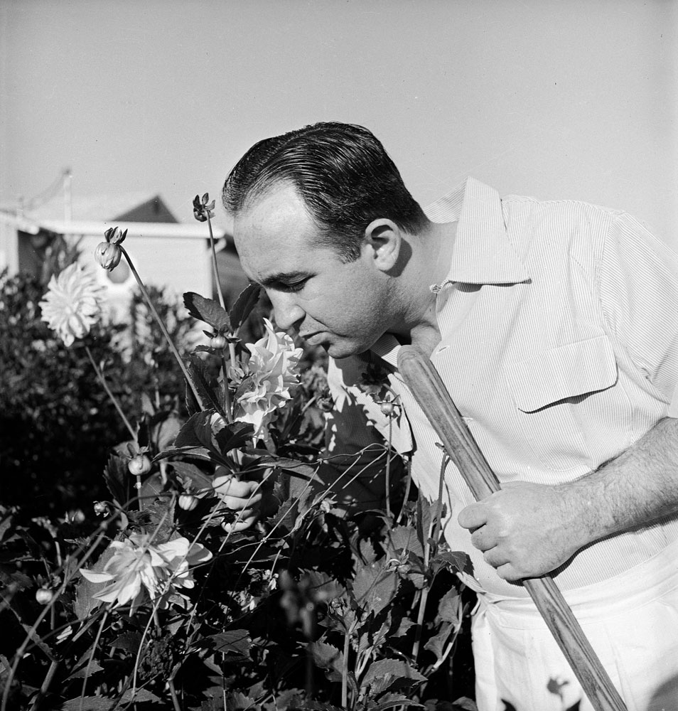 Gangster Mickey Cohen smells flowers at home in Los Angeles, 1949.