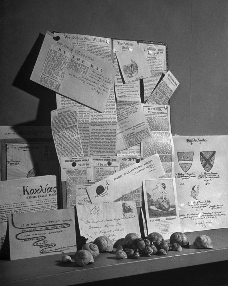 British Snail-Watching Society, 1946.