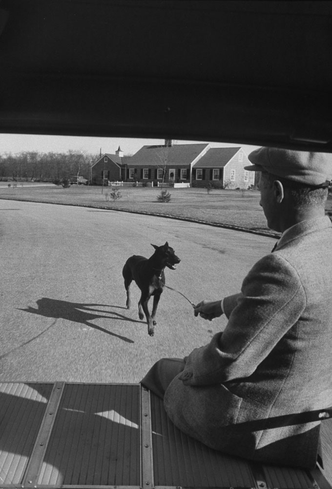 Doberman in training runs behind automobile near Roslyn, NY, as handler Peter Knoop rides.