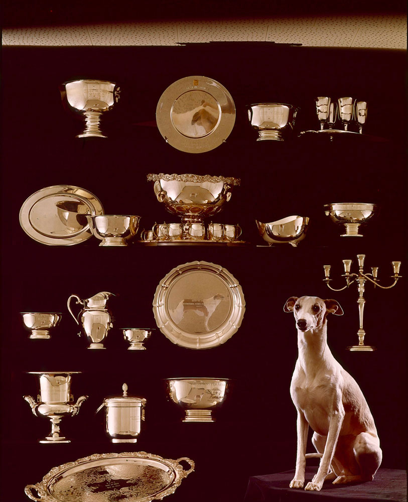 Whippet, Courtenay Fleetfoot of Pennyworth, Best in Show, 1964.