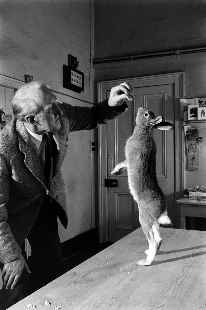 Horace the hare and Cecil S. Webb, director of the Dublin Zoo, 1956.