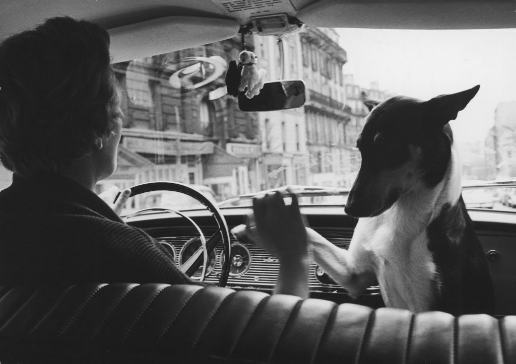 Woman taxi driver sharing front seat with pet dog, Paris, 1963.