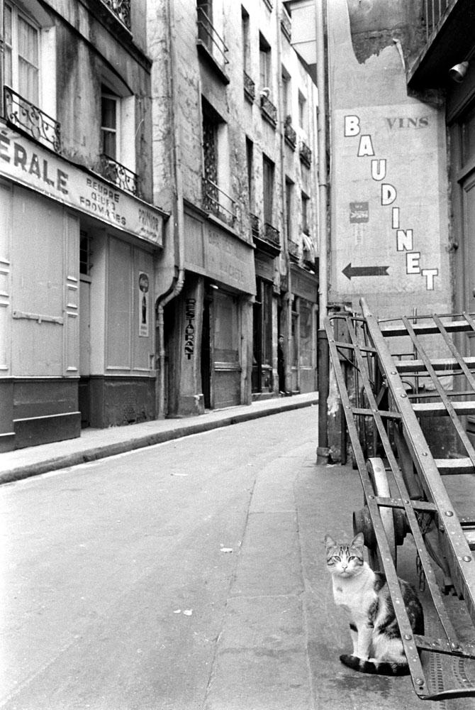 Cat in the street, Paris, 1963.