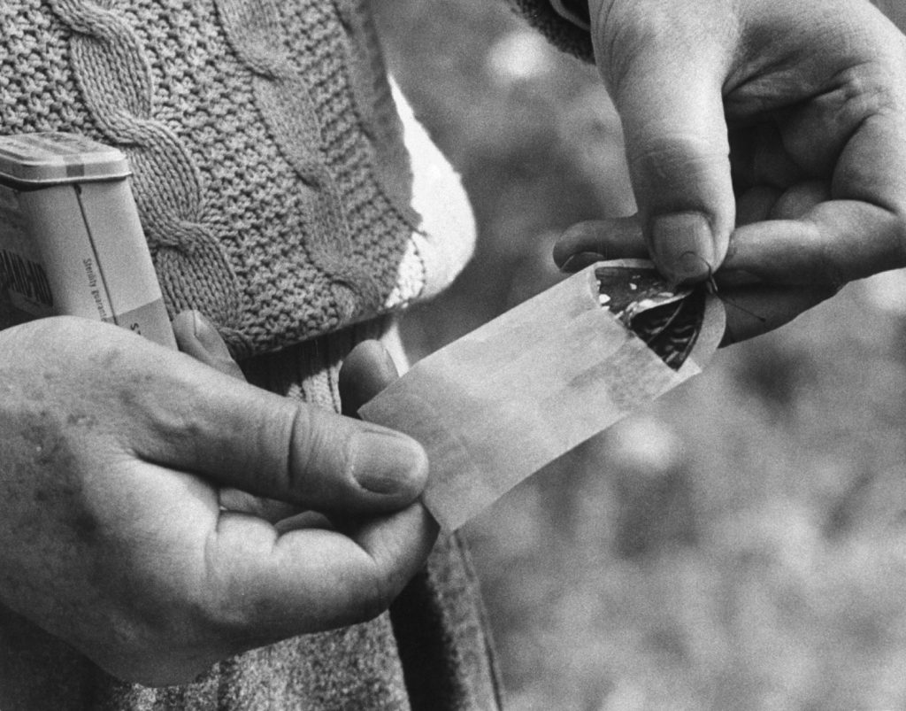 Vladimir Nabokov puts a butterfly into an envelope, Ithaca, N.Y., 1958.
