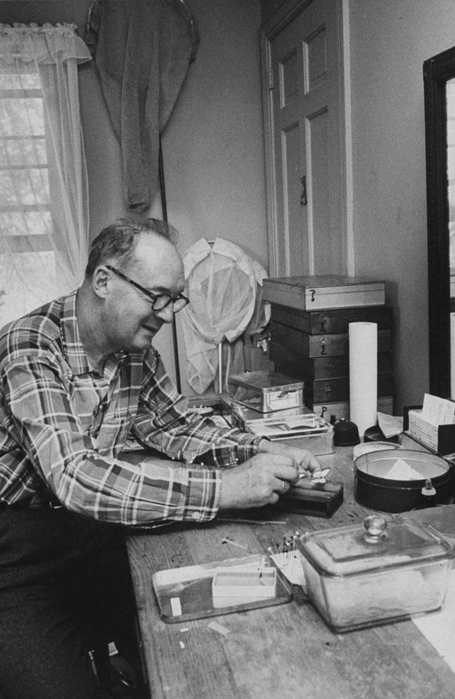 Vladimir Nabokov mounting his butterflies, Ithaca, N.Y., 1958.