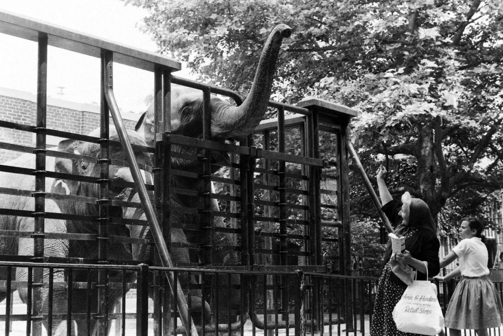 Elephants in Central Park, 1961.