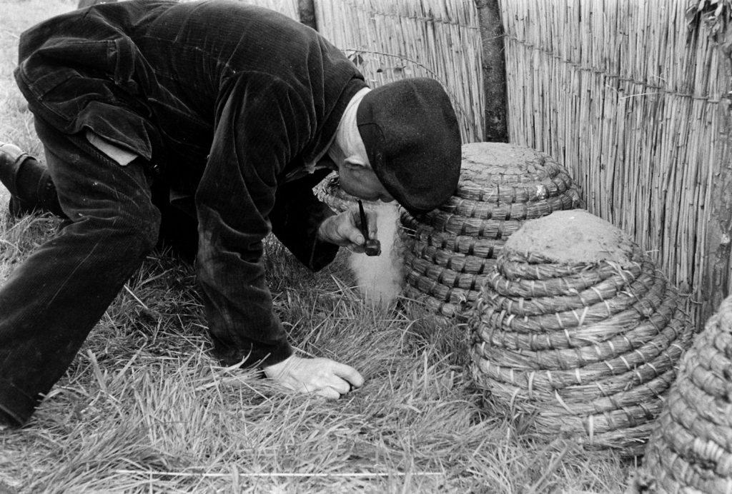 Prospective buyer at bee market, Veenendaal, Netherlands, 1956.
