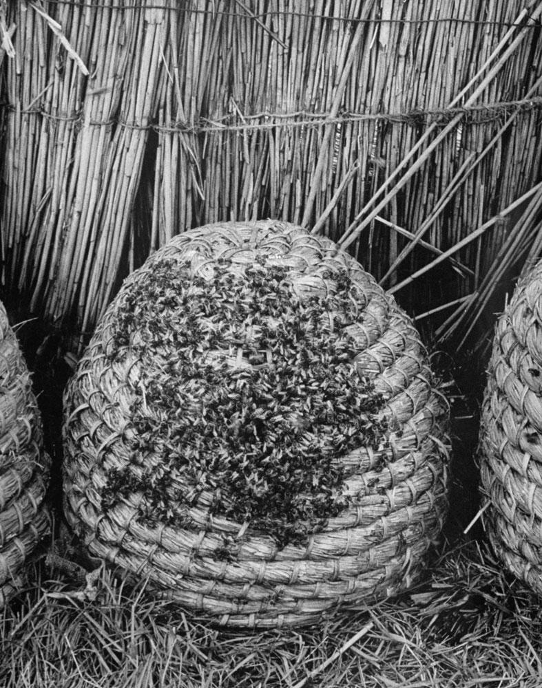 Bees at market, Veenendaal, Netherlands, 1956.