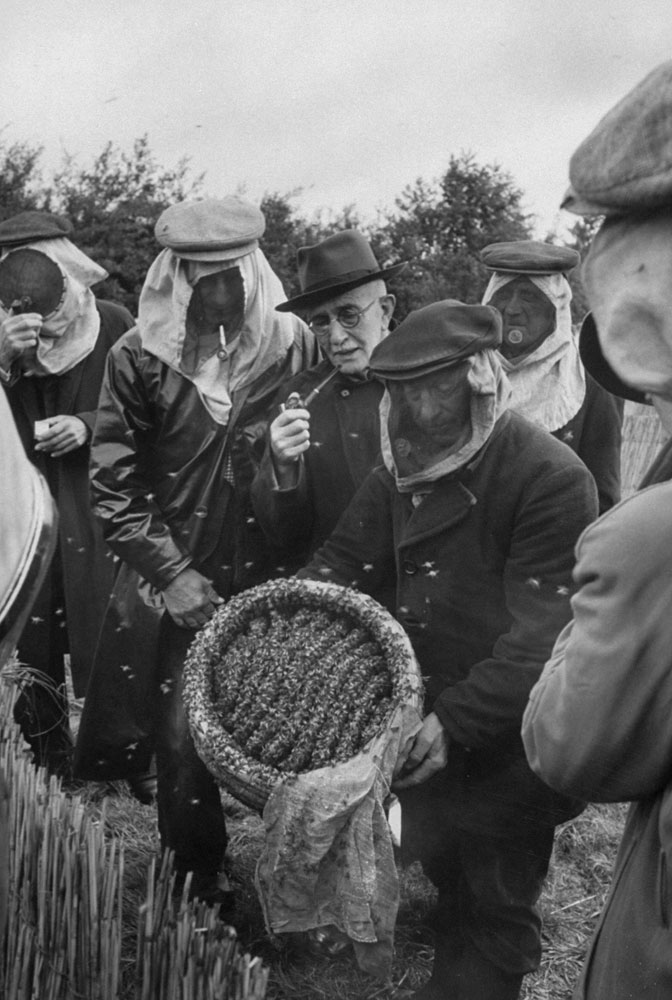 Exhibiting bees, beekeeper holds up open end of hive. Maskless man in center is a judge. Prize of five guilders ($1.30) is awarded best hive at sale.