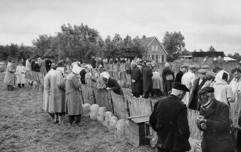 Dutch Bee Market, 1956