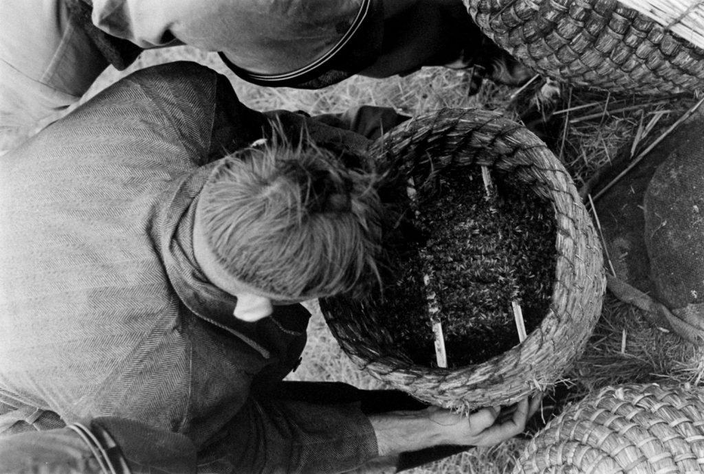 Bee market, Veenendaal, Netherlands, 1956.