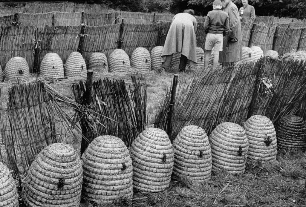 Bee hives at bee market, Veenendaal, Netherlands, 1956.