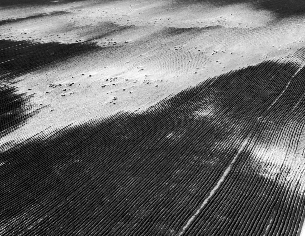 Antidust measure of furrowing land, taken by a conservation-minded farmer in Baca County, goes to naught when neighbor's unfurrowed land blows across his farm, killing crop of winter wheat.