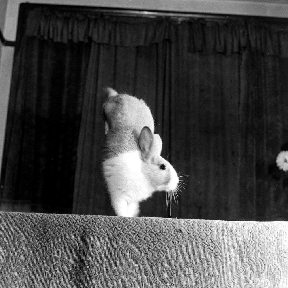 Junior the rabbit.
