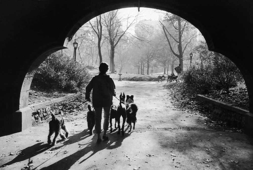 Dog walkers in Central Park, New York, 1967.