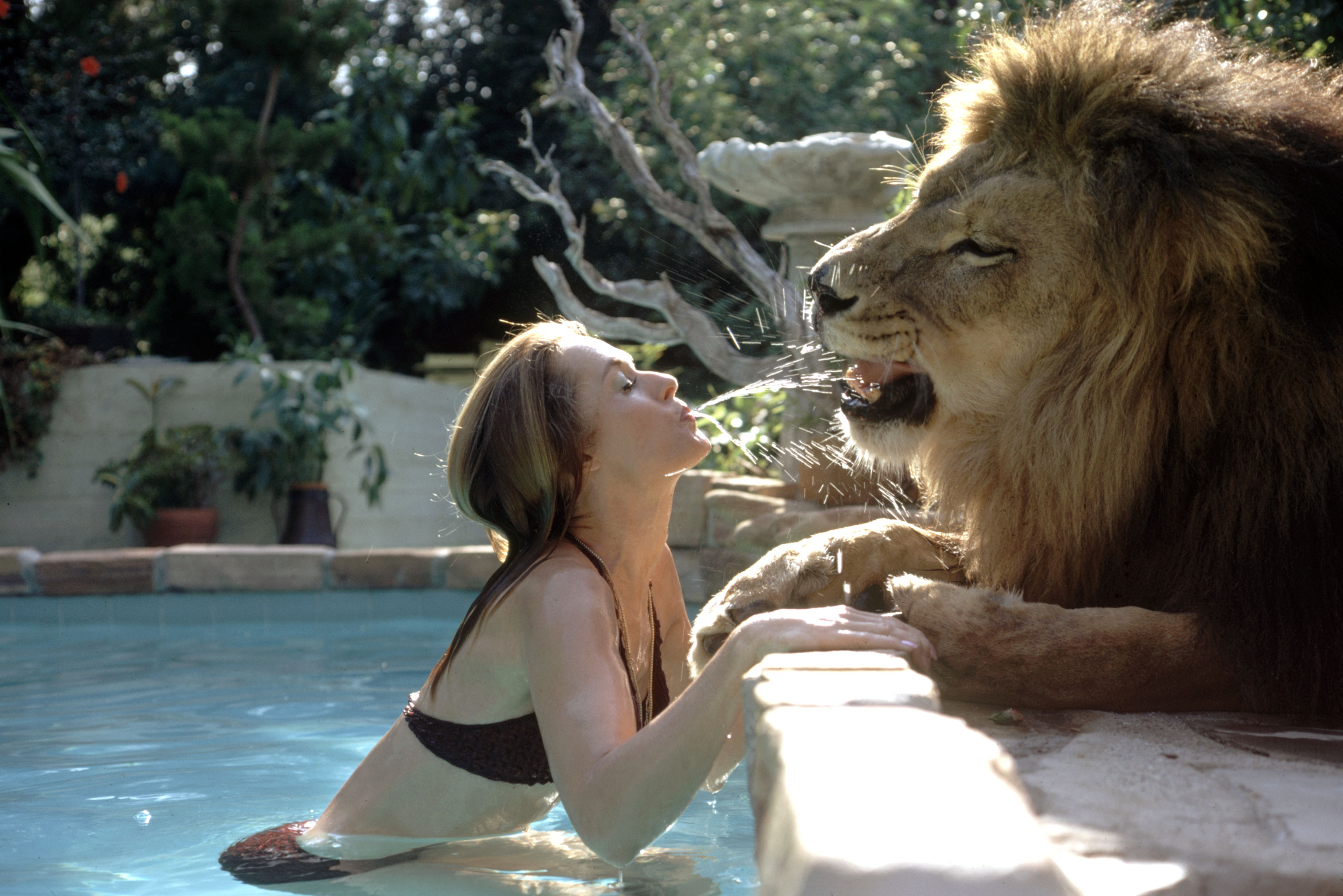 Tippi Hedren in her swimming pool, spouting water at Neil the lion, Calif., 1971.