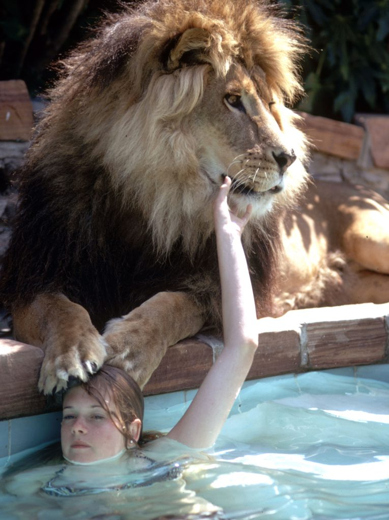 Tippi Hedren's daughter, Melanie Griffith, with Neil the lion.