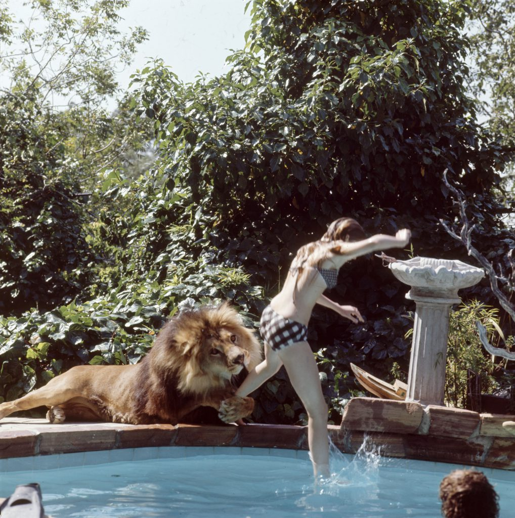 Melanie Griffith at her parents' home with Neil the lion, 1971.