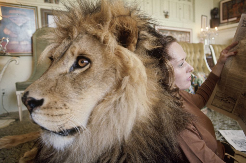 Tippi Hedren and Neil the lion, 1971.