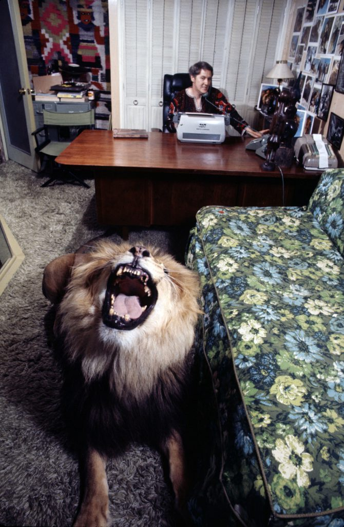 Noel Marshall (husband of Tippi Hedren) works in his study while Neil the pet lion roars, 1971.