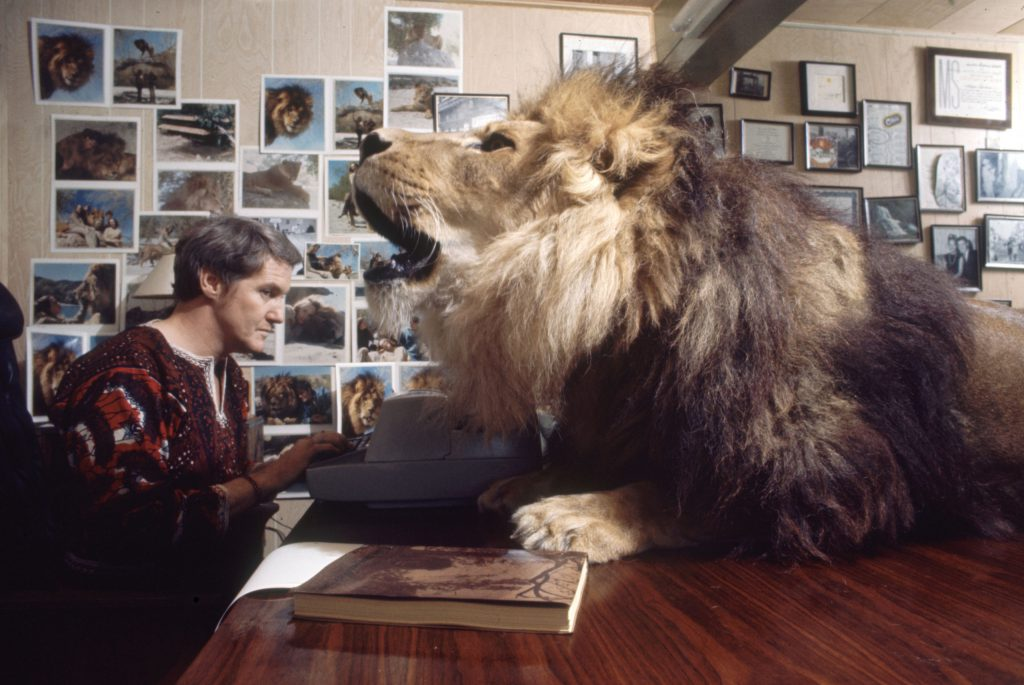 Noel Marshall (husband of Tippi Hedren) with Neil the pet lion, 1971.