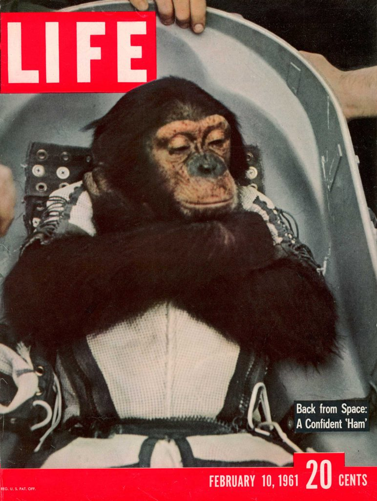 LIFE With the Astrochimps: Early Stars of the Space Race