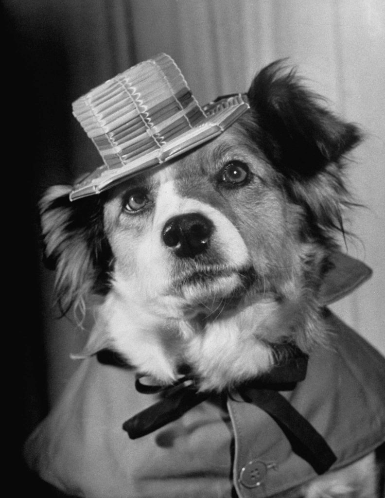"""Lucky in the movie, """"The Lost Dog""""."""