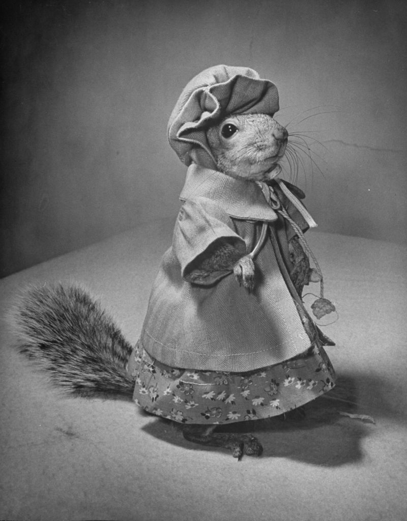 A Squirrel's Guide to Fashion