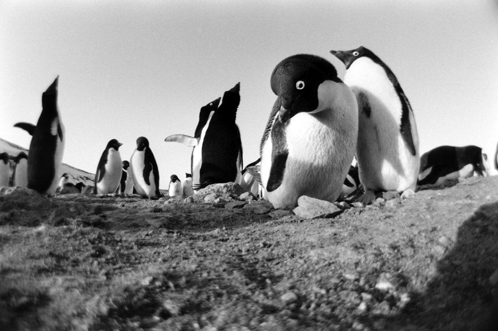 Antarctica, 1964.