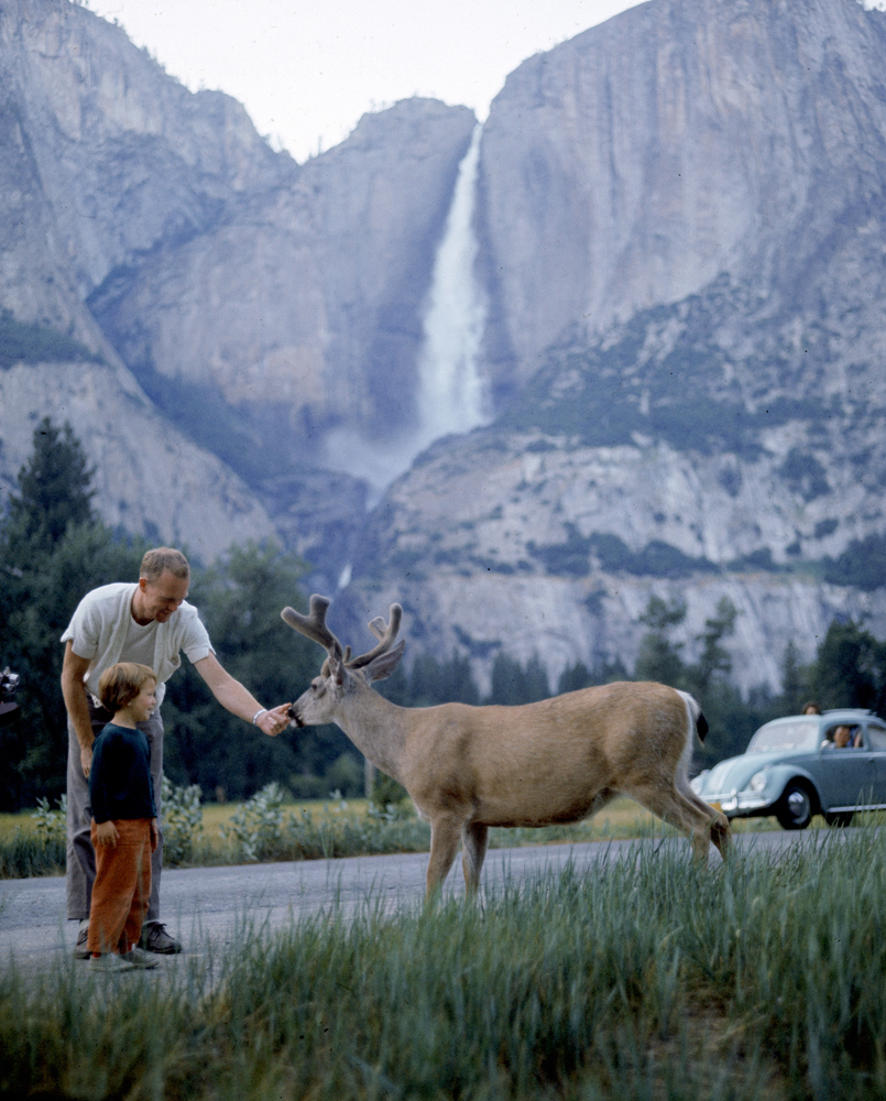 Father and son (unwisely) feed a deer, Yosemite National Park, 1962.