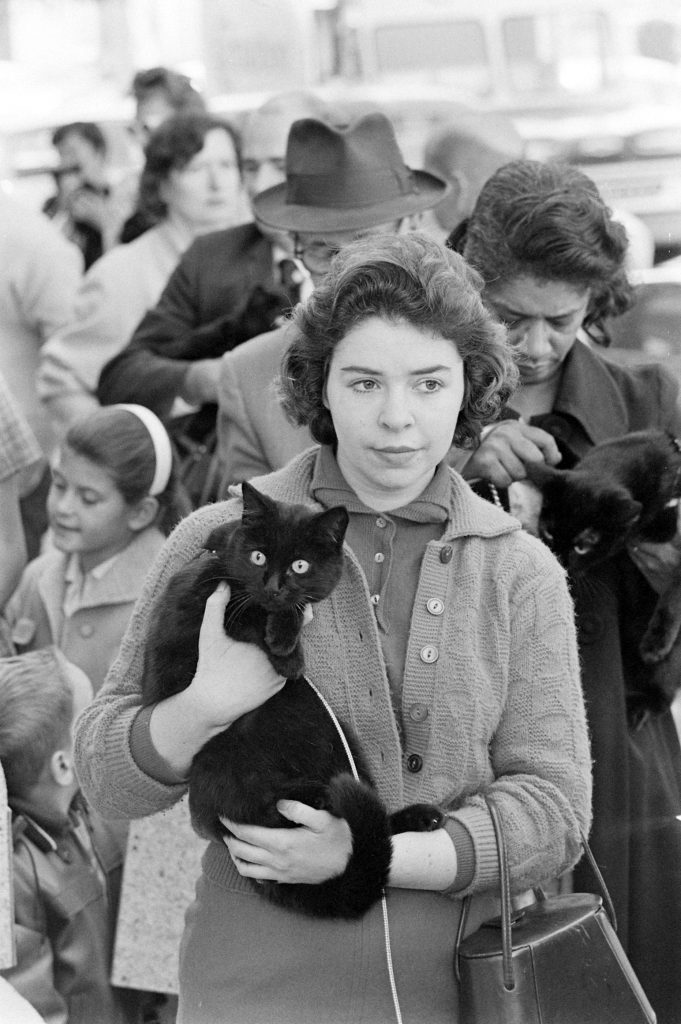 Black Cat Audition, 1961