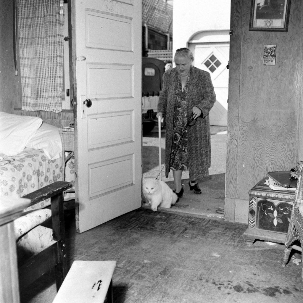 Seeing eye cat, 1947