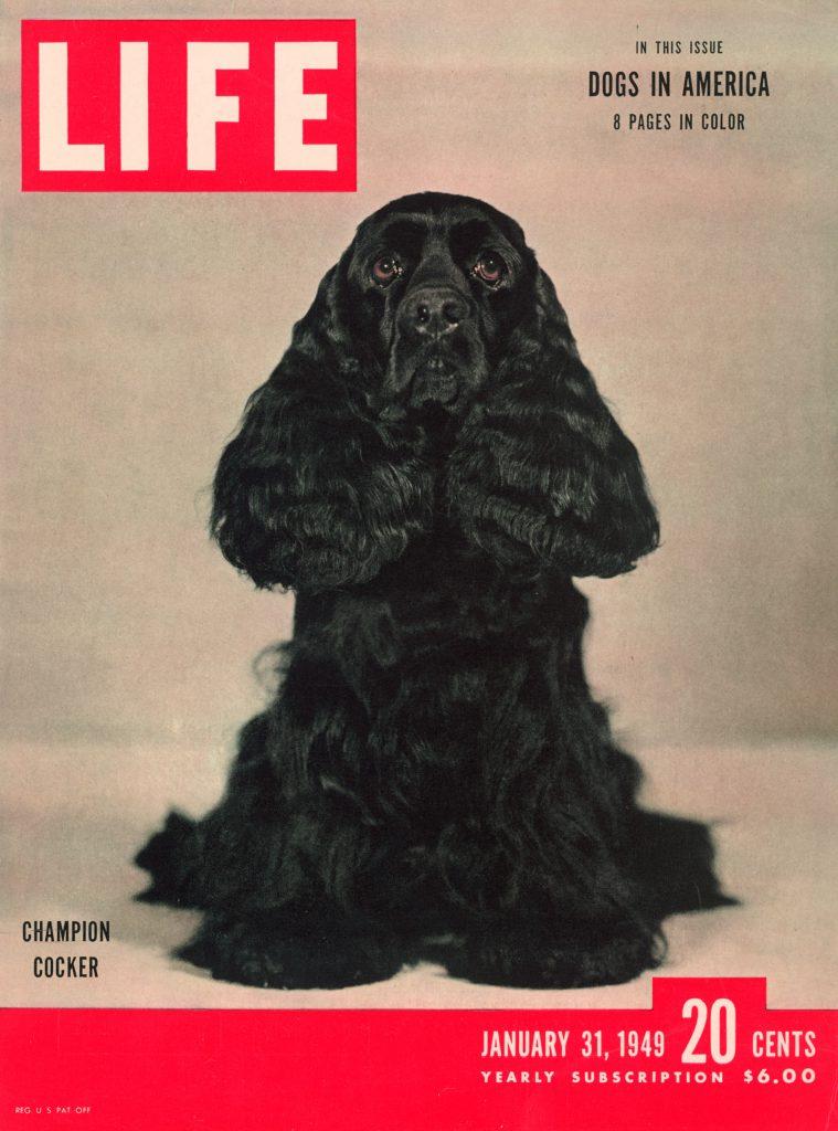 January 31, 1949 LIFE Magazine cover