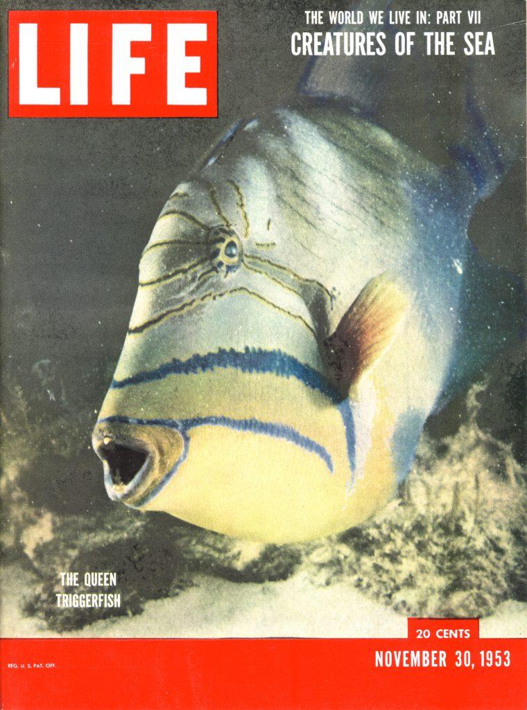 November 30, 1953 LIFE Magazine cover