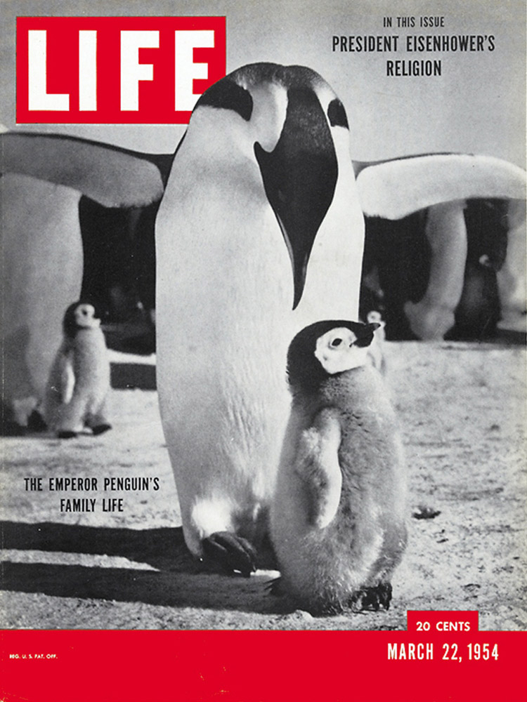 March 22, 1954 LIFE Magazine cover