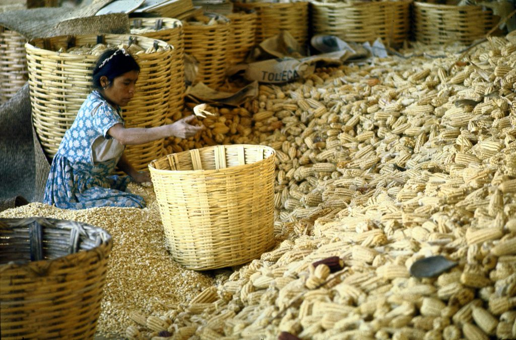Woman shelling corn in wicker hampers at a local market, Mexico.