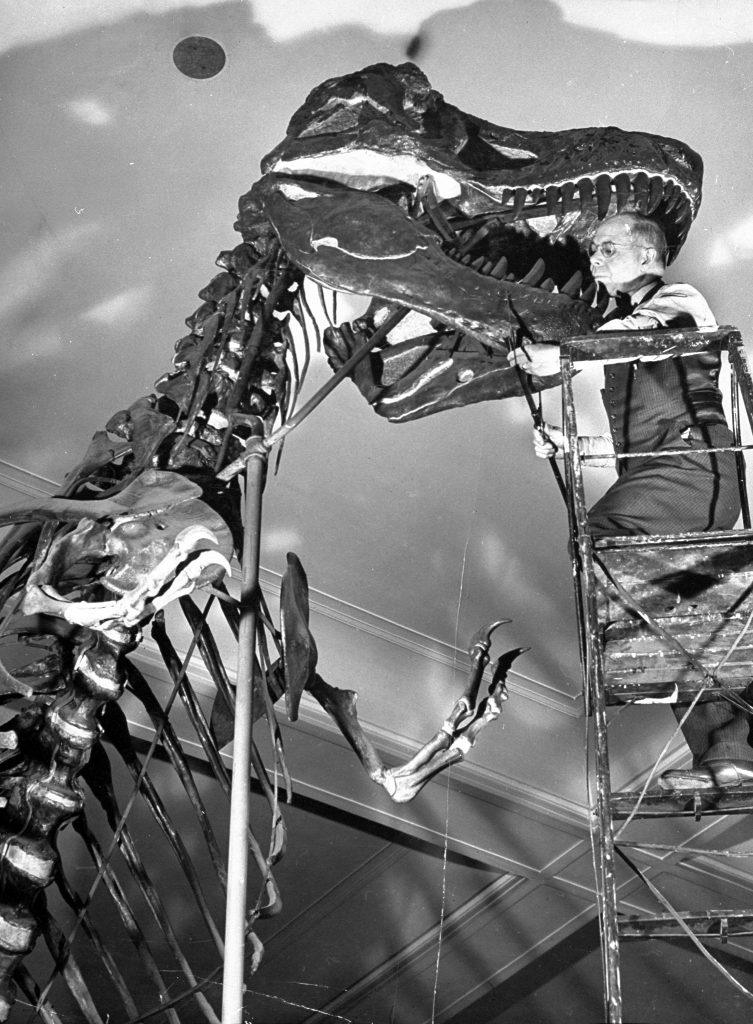 Tyrannosaurus was the largest of flesh-eaters, has a skull which weighs 1,000 lb. Though it had tremendous hind legs, its front legs were no larger than a man's arm.